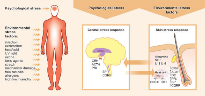 What is Psychological Stress