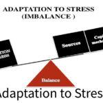 Adaptation to Stress