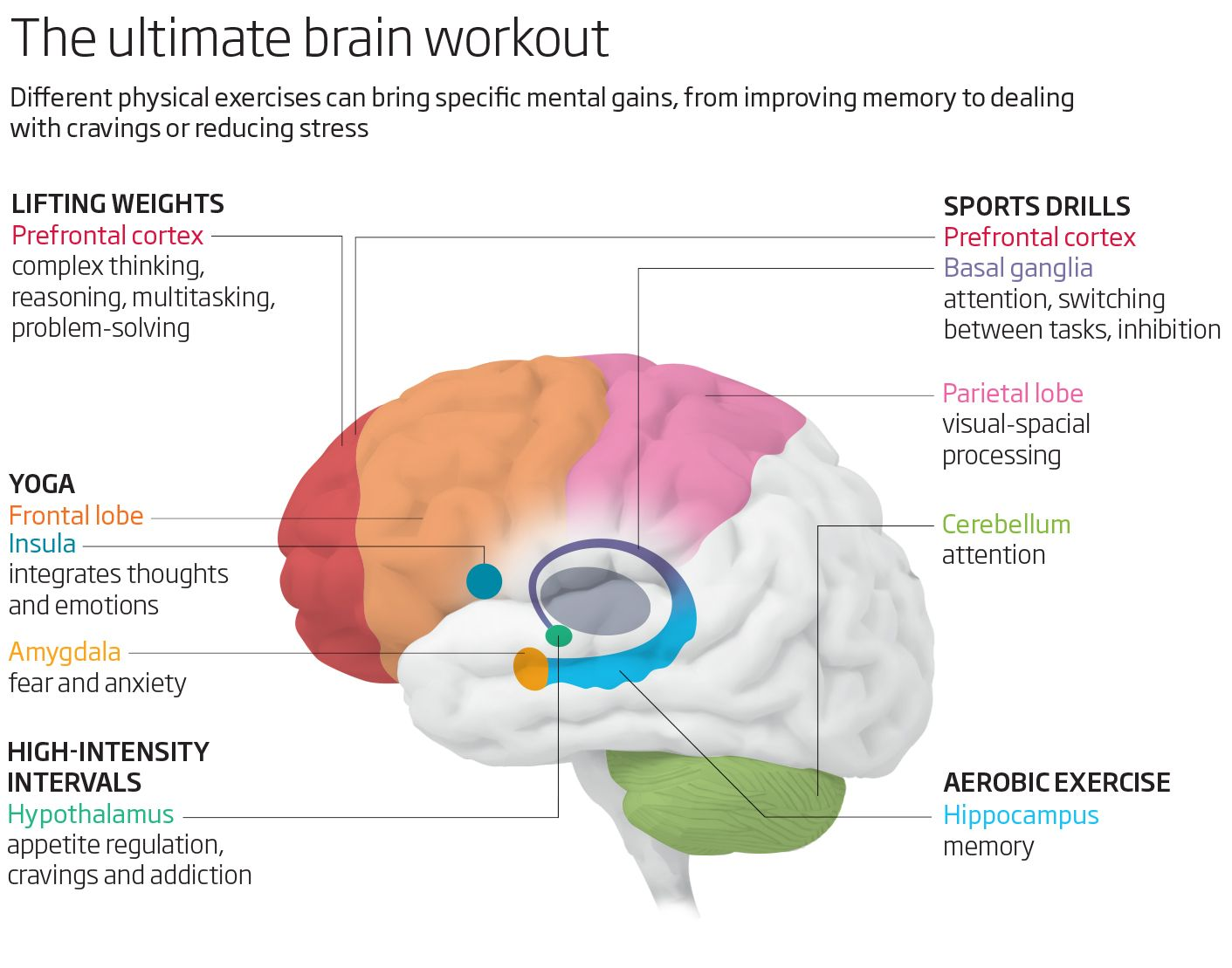 How Physical Exercise Makes Your Brain Better