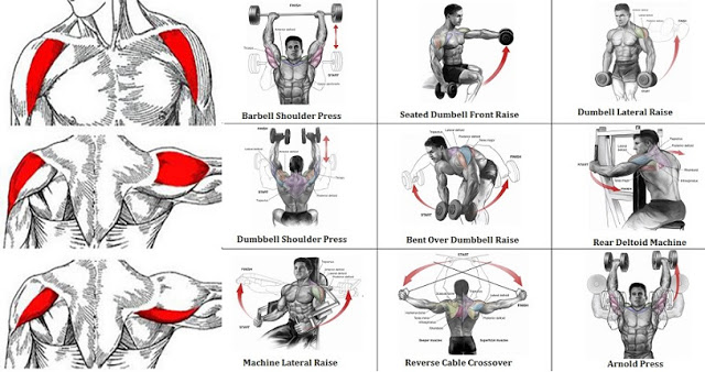Most helpful shoulders exercises that you need